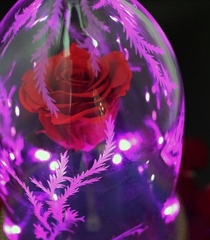 Enceinte La Belle Et La Bete Rose Enchantee