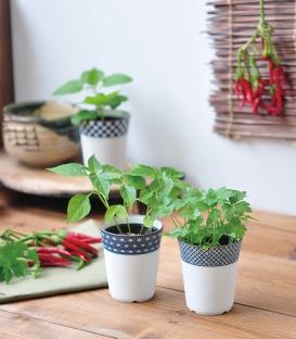 3 plantes à faire pousser Yakumi épices japonaises
